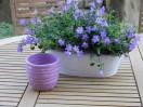 Vaso ceramica lilla'